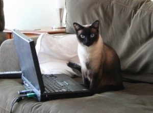 cat, translating