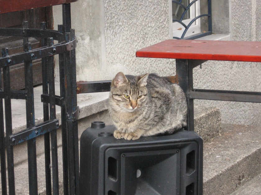 This cat thinks that music creates nice vibrations.