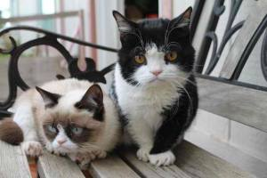 The Grumpy Cat and her Brother Pokey.