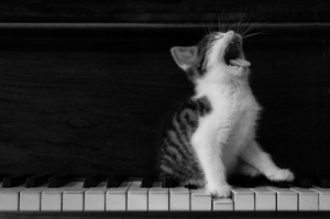 A kitty singing. Or yawning, more likely.