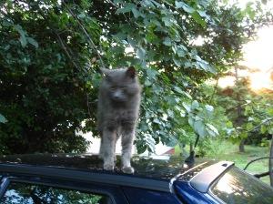 Yay, the kitty isn't running away!