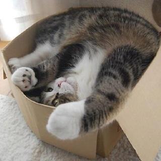 Comfy. Really.