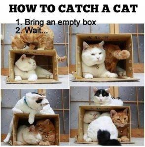Still comfy. More cats equals more comfy.