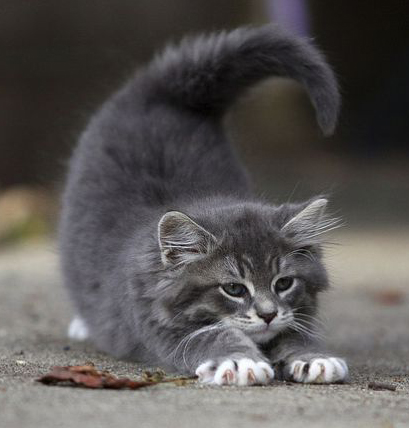 stretching-kitty
