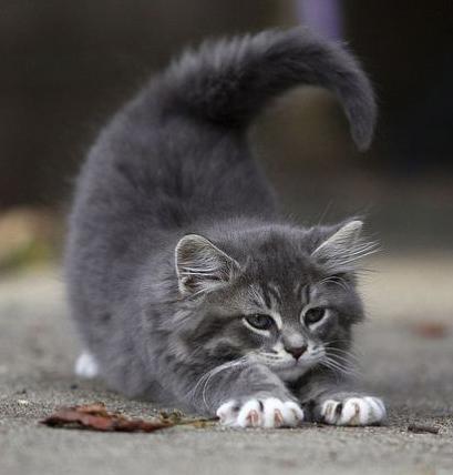 stretching-kitty