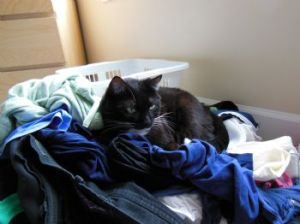 Well, your cat doesn't mind the clutter.