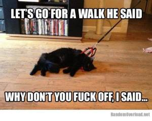 Trying to walk a cat isn't always a good idea.