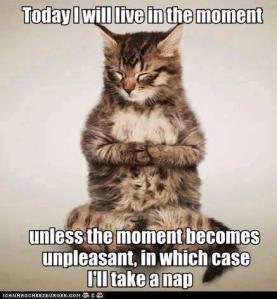 catwisdom