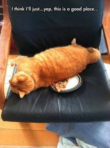 What's a pizza doing on his chair, anyway?