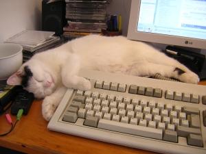 Writers need to take a nap, too!