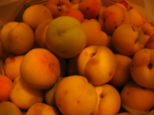 They may look like apricots, but they're actually peaches. And they're tasty.